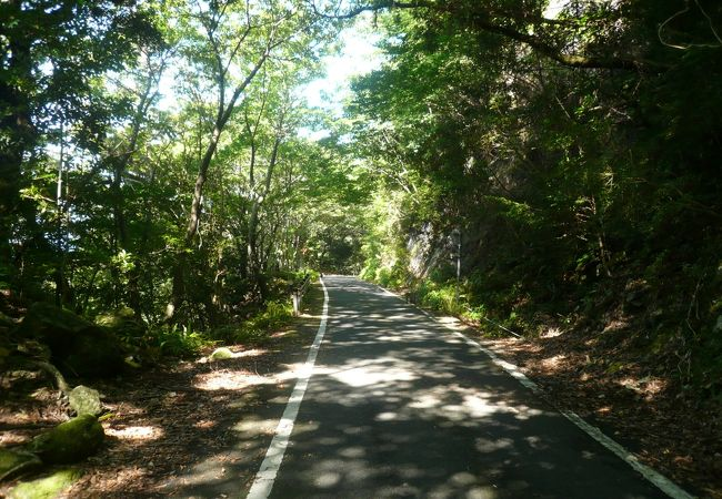 木漏れ日溢れる林道