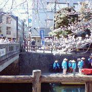 大垣の水路沿いに咲き誇る桜の下でのんびり船旅