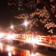 三大夜桜のひとつ。昼もいいですよ