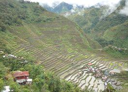 フィリピン コルディリェーラの棚田群