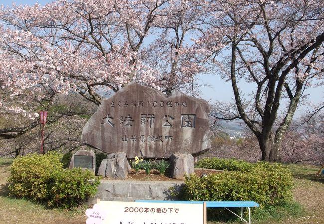 日本のさくらの名所百選の大法師公園は2000本のソメイヨシノが咲く所