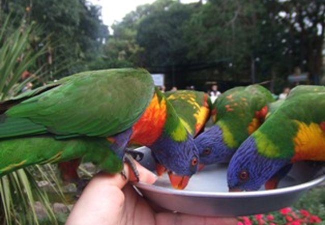 沢山鳥が乗ると、トレイが重くなります。必死にがまん