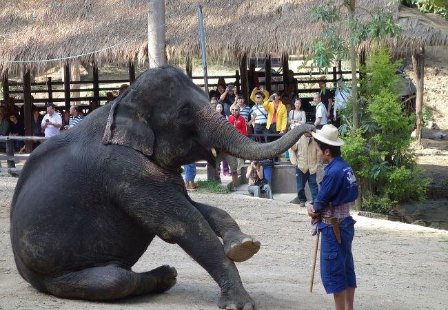 象と象使いは一度パートナーを組むと一生添い遂げるそうです。