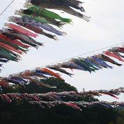 相模川で実施される「泳げ鯉のぼり」祭り