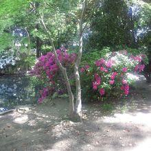 佐太天神社の森