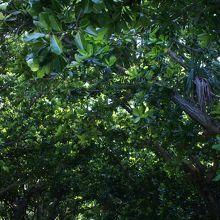 木々の生命力に圧倒される緑のトンネル