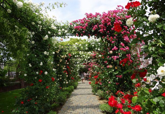 ひとつひとつ違う種類のバラの回廊
