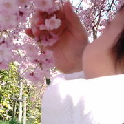 たけべの森はっぽね桜まつり