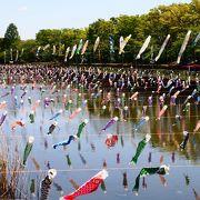 4000匹を超えるこいのぼりが泳ぐ圧巻の風景! 桜の咲いてる時期なら尚更キレイ!