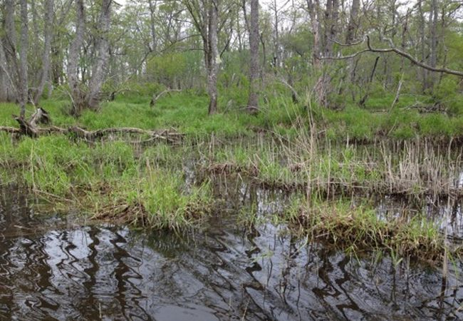 これぞ湿原