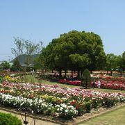 6月上旬でもまだバラが楽しめました。バラを求めて園内ウロチョロしてしまいました。
