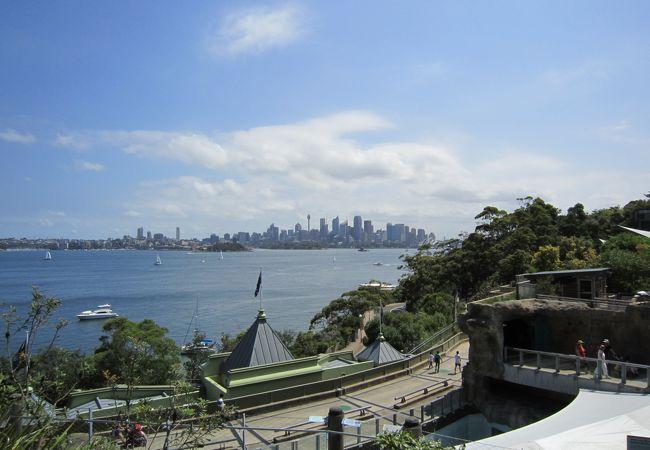 午後になって晴れてきました。対岸にはシドニーの街。