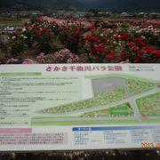 さかき千曲川ばら公園のばら祭りに行ってきました。
