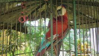 グアム動植物園&海洋生物園