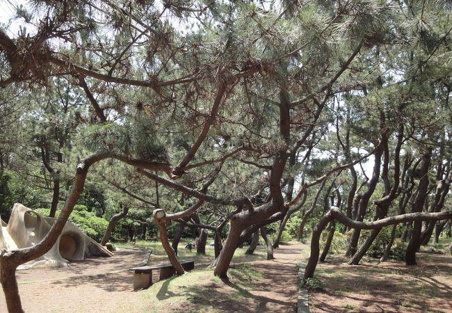小和田浜公園