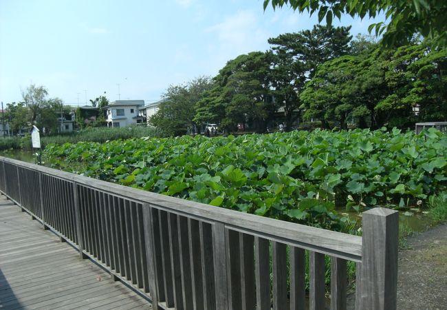 蓮池/桜小路公園