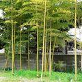 写真:佐太陣屋跡