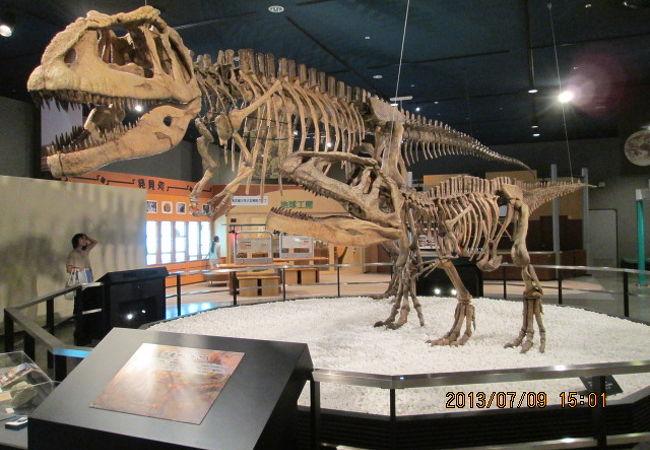 恐竜の骨格です