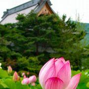蓮のフェスタin信濃国分寺