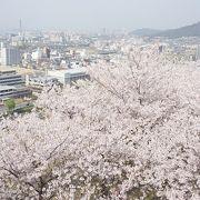 桜の季節に行くべき!