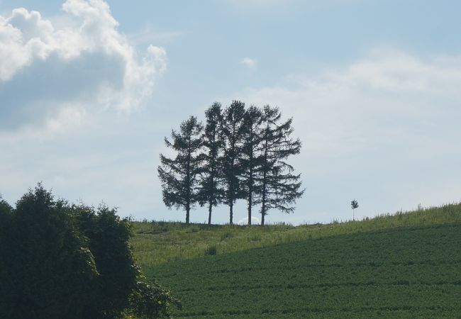 5本の松 (嵐の木)