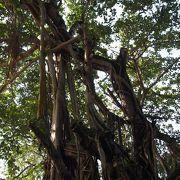 コロンボ市内の癒しの公園