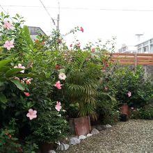 毎回、ビール呑みながら宿の方と語らうすてきなお庭。
