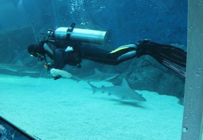 サメの水槽をお掃除中