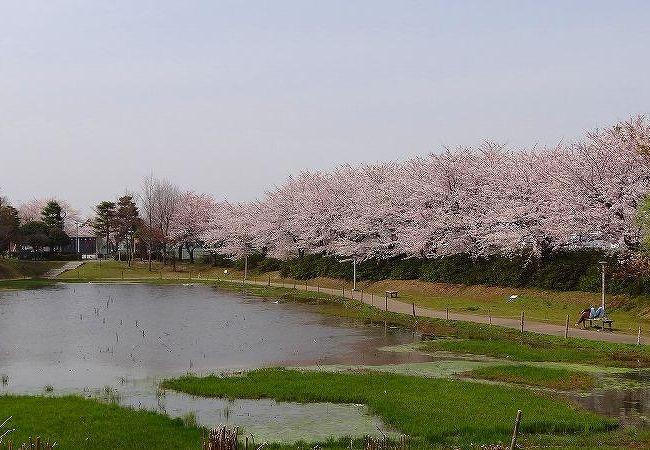 中井沼公園
