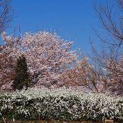 桜咲く、まほろばの里に有る市民の体験学習と野外活動の拠点