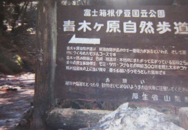 ケ 怖い 樹海 青木 原