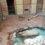 小さな動物園