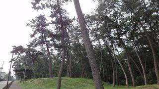 広大な松林
