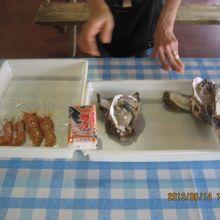 岩牡蠣と甘エビ