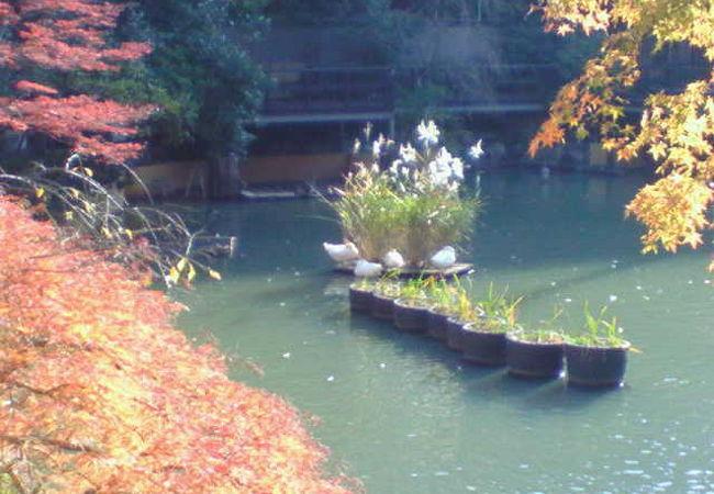 神社内は紅葉がきれいな場所もあります。