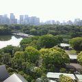 桜の名所だしいい散歩のコース