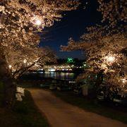 満開の桜☆