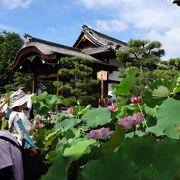 7月は7時から拝観が可能★境内に咲き乱れる蓮がおすすめ!
