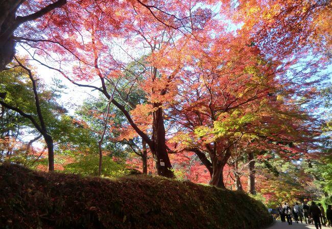 坂道は疲れますが紅葉はキレイ