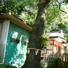春日神社のシイの社叢