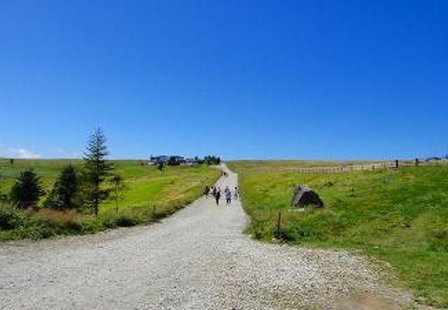 山本小屋への道