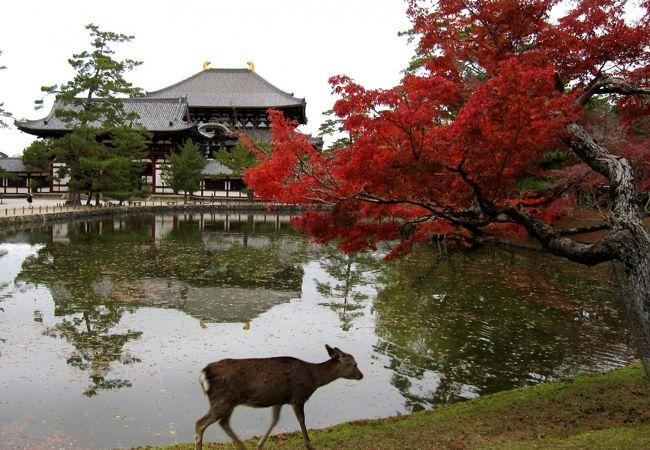 鹿と鏡池と紅葉と東大寺