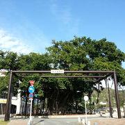 名護の街を見守り続ける神木(?)