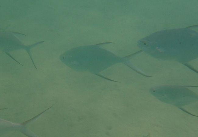 この魚10匹に囲まれました!!