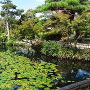 回遊式庭園で、観賞後に抹茶を頂き、ゆっくりと休憩しながら、庭園観賞が出来ます。