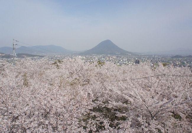 桜を見下ろせる!