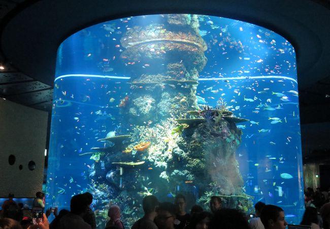 円柱型の巨大水槽。色合いが華やか