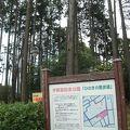 写真:宇都宮記念公園 ひのきの散歩道