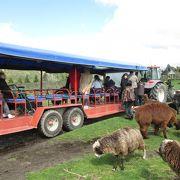 牧場を楽しめる施設