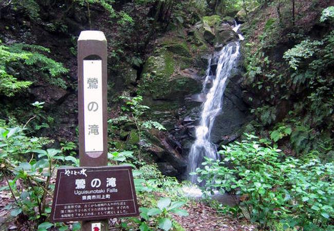 神域の山に流れる滝。